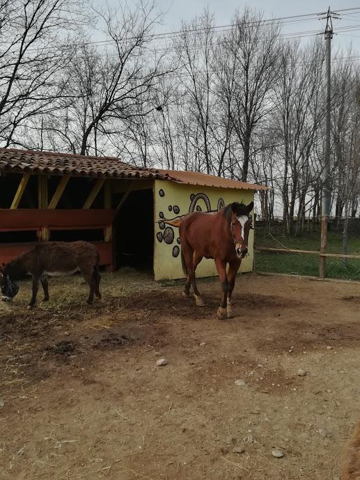 Centro-Gambaro-Ivancich-8
